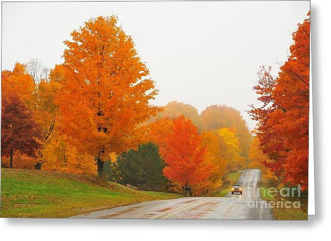 Autumn Trees Greeting Cards - Autumn Color Tour 10 Greeting Card by Terri Gostola