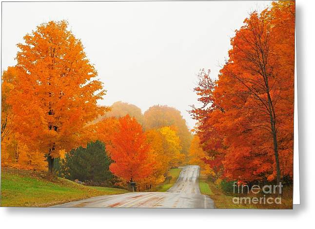 Fall Colors Greeting Cards - Autumn Color Tour 5 Greeting Card by Terri Gostola