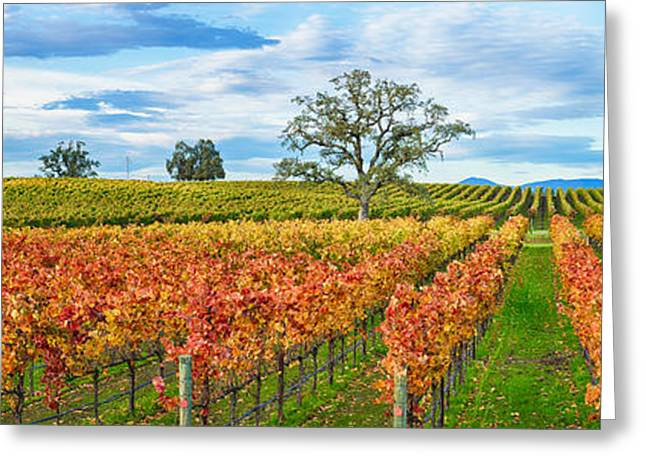 Winemaking Greeting Cards - Autumn Color Vineyards, Guerneville Greeting Card by Panoramic Images