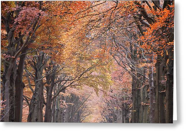 Autumn - Colorful Red Green Orange Nature Landscape Fine Art Photography Greeting Card by Artecco Fine Art Photography