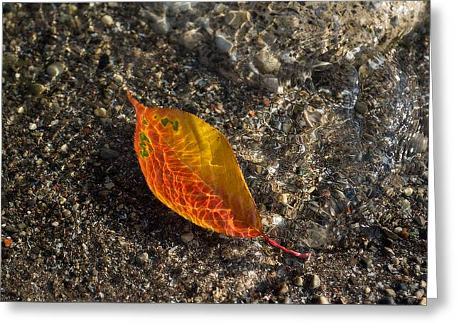 Sand Patterns Greeting Cards - Autumn Colors and Playful Sunlight Patterns - Cherry Leaf Greeting Card by Georgia Mizuleva