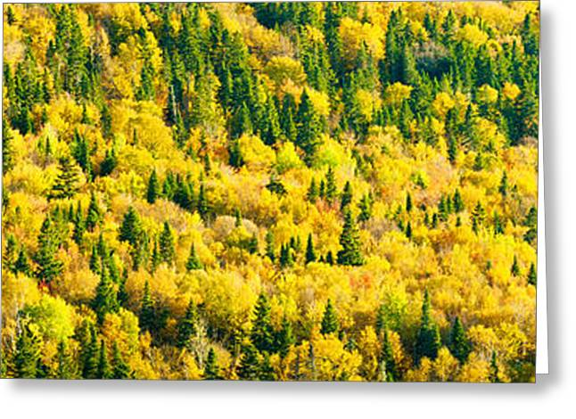 Brunswick Greeting Cards - Autumn Colors At Appalachian Mountains Greeting Card by Panoramic Images