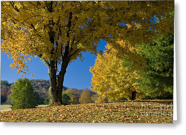 Turning Leaves Photographs Greeting Cards - Autumn Colors Greeting Card by Brian Jannsen
