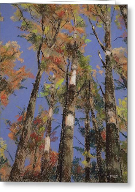 Tree Pastels Greeting Cards - Autumn Colors Greeting Card by Christopher Reid