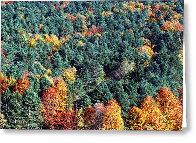 Vibrant Green Greeting Cards - Autumn Colors In Forest Greeting Card by Mikel Martinez de Osaba