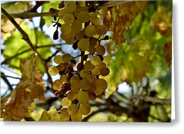 Autumn Colors In Wine Country Greeting Card by Patricia Sanders