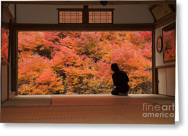 Fir Trees Greeting Cards - autumn colors Japan Greeting Card by Eyal Bartov