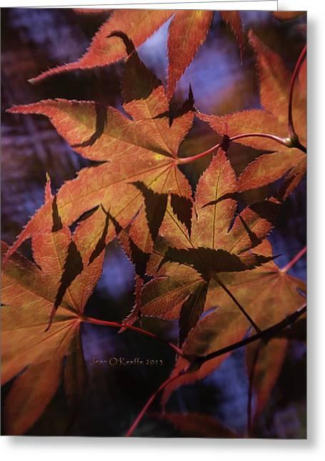 Contemporary_art Greeting Cards - Autumn Colors Greeting Card by Jean OKeeffe Macro Abundance Art