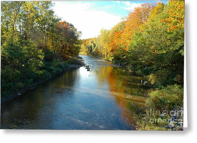 Struckle Greeting Cards - Autumn Colors Greeting Card by Kathleen Struckle