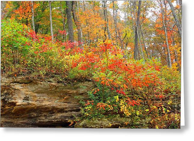Most Viewed Photographs Greeting Cards - Autumn Colors Greeting Card by Lorna Rogers Photography