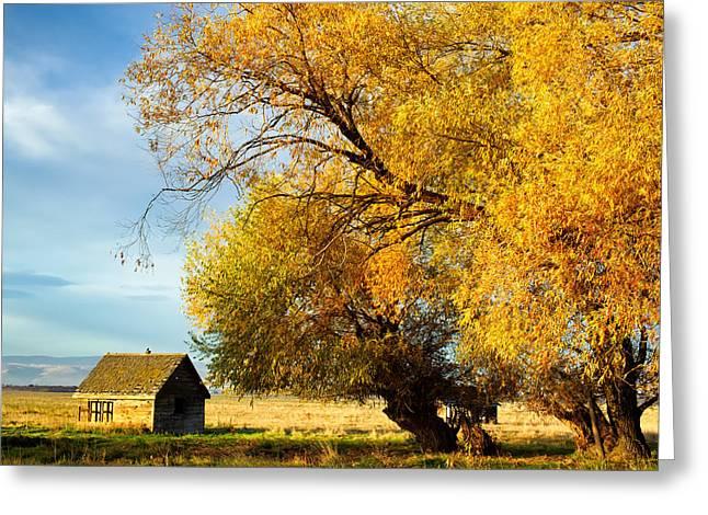 Kittitas Valley Greeting Cards - Autumn Colors - Lyons Road - Kittitas County - Washington - October  Greeting Card by Steve G Bisig
