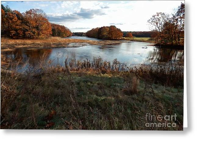 Marcia Lee Jones Greeting Cards - Autumn Colors Greeting Card by Marcia Lee Jones