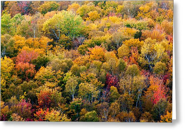 Autumn Colors Greeting Card by Matt Dobson