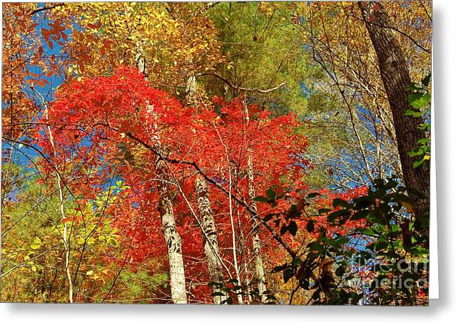 Autumn Colors Greeting Card by Patrick Shupert