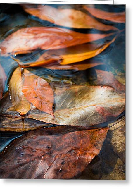 Autumn Prints Greeting Cards - Autumn Colors Greeting Card by Shelby  Young