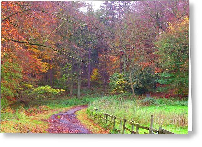 Forestry Commission Greeting Cards - Autumn Colour Greeting Card by Jefferson Payne