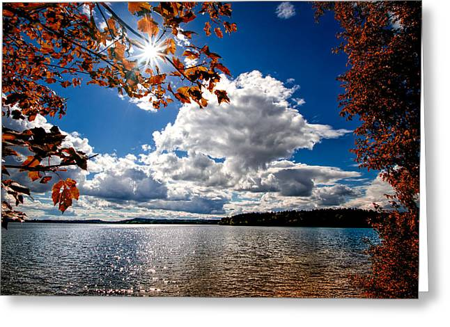 Calm Waters Greeting Cards - Autumn  Confidential  Greeting Card by Bob Orsillo