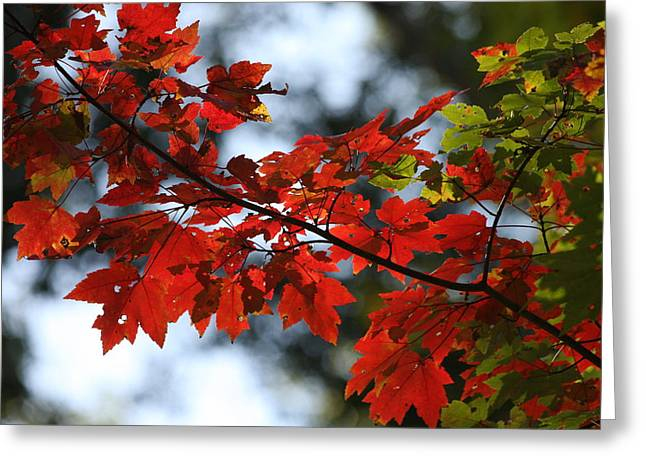 Original Photographs Greeting Cards - Autumn Contrasts Greeting Card by Vadim Levin