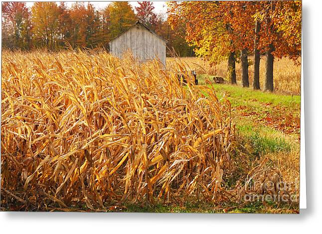 Indiana Autumn Greeting Cards - Autumn Corn Greeting Card by Mary Carol Story