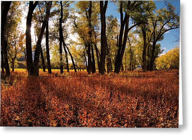 Autumn Cottonwood Sanctuary Greeting Card by Leland D Howard