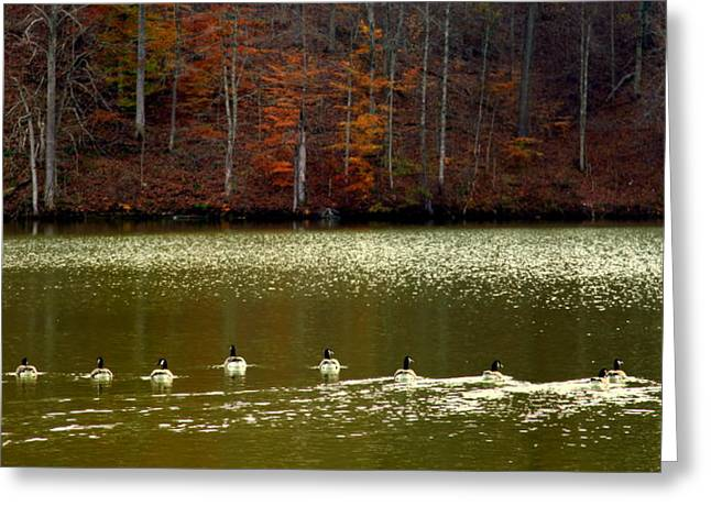 Geese Photographs Greeting Cards - Autumn Cove Greeting Card by Karen Wiles