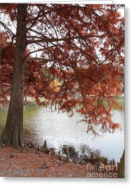 Gum Cypress Greeting Cards - Autumn Cypress on Lake Ella Greeting Card by Carol Groenen