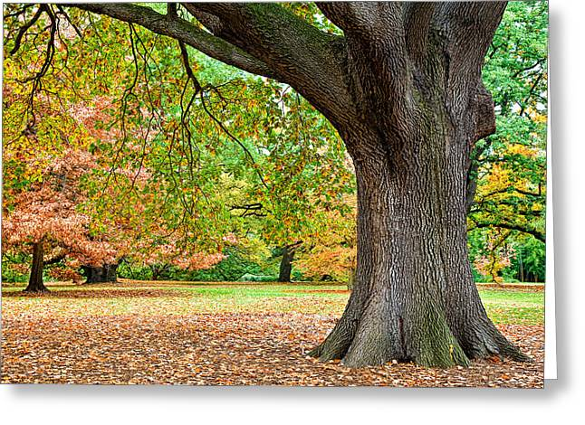 Autumn Greeting Card by Dave Bowman