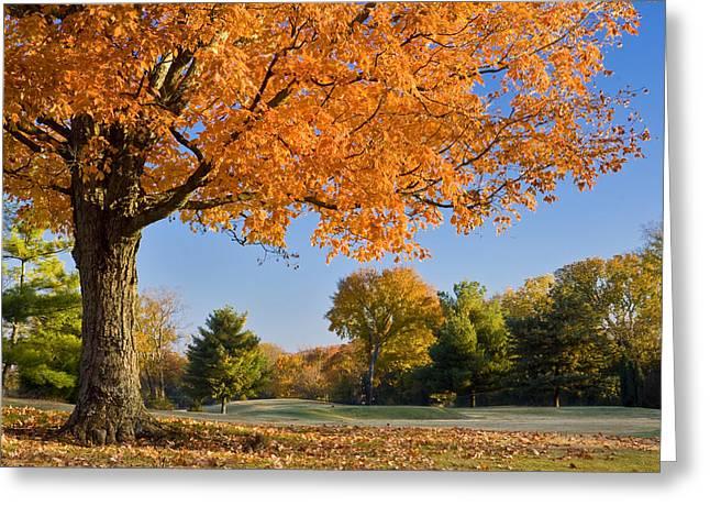 Autumn Dawn Greeting Card by Brian Jannsen