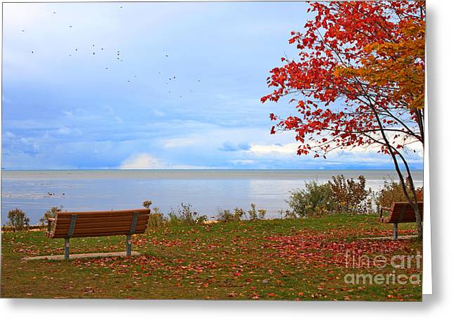 Photograph Tapestries - Textiles Greeting Cards - Autumn Greeting Card by Dipali S