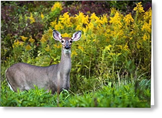 Gentle Scene Greeting Cards - Autumn Doe Greeting Card by Christina Rollo