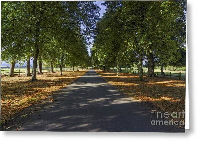 Breezy Greeting Cards - Autumn Drive Greeting Card by Ian Mitchell