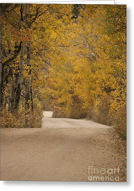 Dirt Image Greeting Cards - Autumn Drive Greeting Card by Juli Scalzi