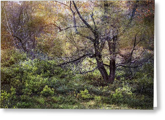 Meadow Willows Greeting Cards - Autumn Enchantment Greeting Card by Debra and Dave Vanderlaan