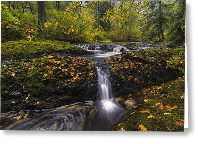 Colors Of Autumn Greeting Cards - Autumn Euphoria  Greeting Card by Mark Kiver