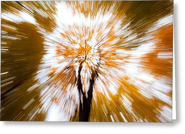 Dave Bowman Photography Greeting Cards - Autumn Explosion Greeting Card by Dave Bowman