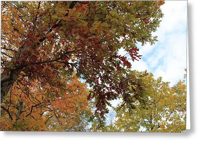 Indiana Autumn Greeting Cards - Autumn Explosion Greeting Card by Jennifer Snelling