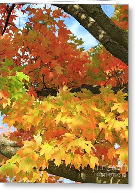 Shades Of Red Greeting Cards - Autumn Extravaganza Greeting Card by Carol Komassa