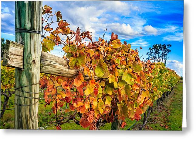 Vintner Greeting Cards - Autumn Falls at the Winery Greeting Card by Peta Thames