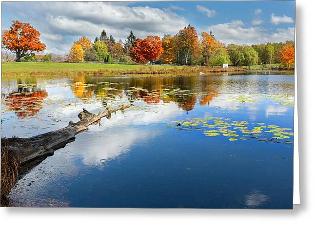 Lilly Pad Greeting Cards - Autumn Farm Pond Greeting Card by Bill  Wakeley