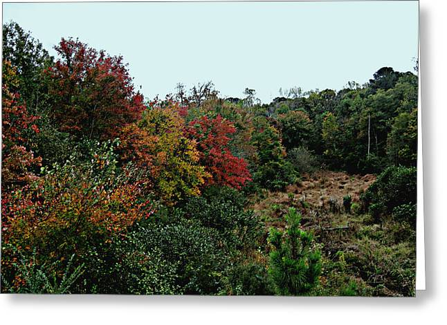 Autumn Photographs Paintings Greeting Cards - Autumn Field Greeting Card by Michael Genova