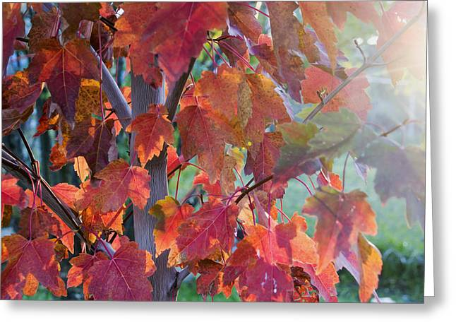 Autumn Flame Greeting Card by Dana Moyer