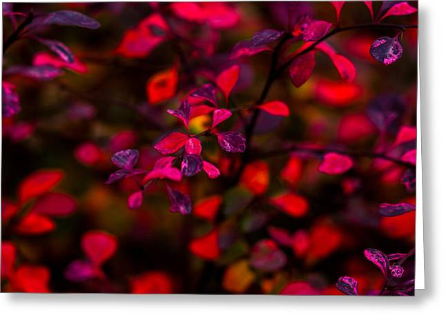 Autumn Flames 2 - Square Greeting Card by Alexander Senin