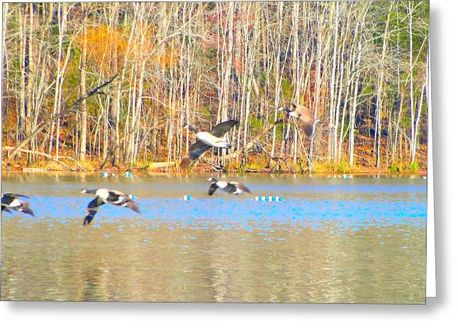Cane Creek Greeting Cards - Autumn Flight Greeting Card by Cindy Croal