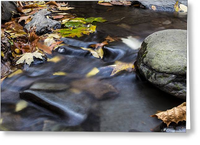 Autumn Flow Greeting Card by Andrew Pacheco
