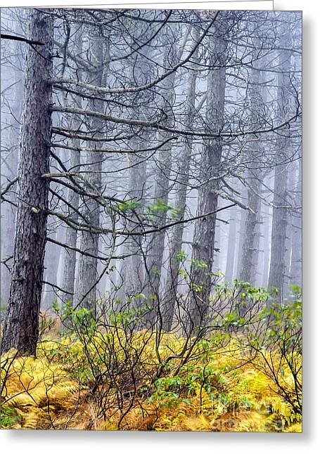 Dolly Sods Wilderness Greeting Cards - Autumn Fog Dolly Sods Wilderness Greeting Card by Thomas R Fletcher