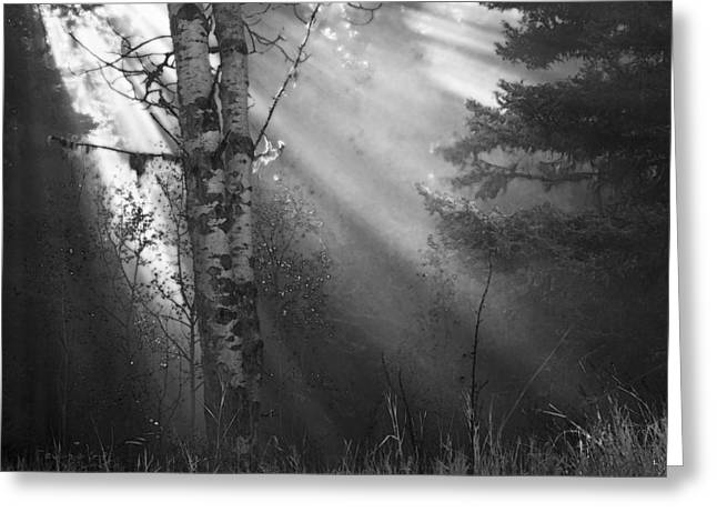 Fir Trees Greeting Cards - Autumn Fog With Sun Rays Bw Greeting Card by Theresa Tahara