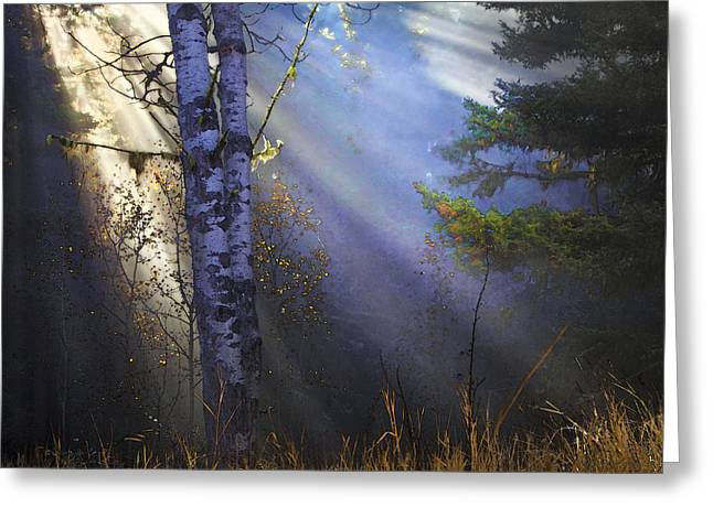 Fir Trees Greeting Cards - Autumn Fog With Sun Rays Greeting Card by Theresa Tahara