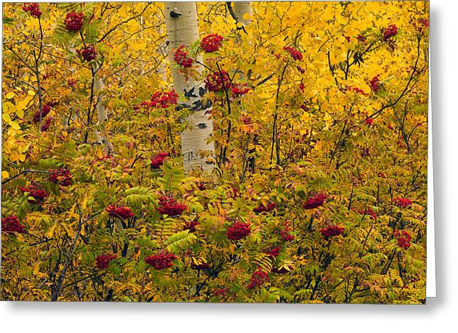 Autumn Forest Colors Greeting Card by Leland D Howard