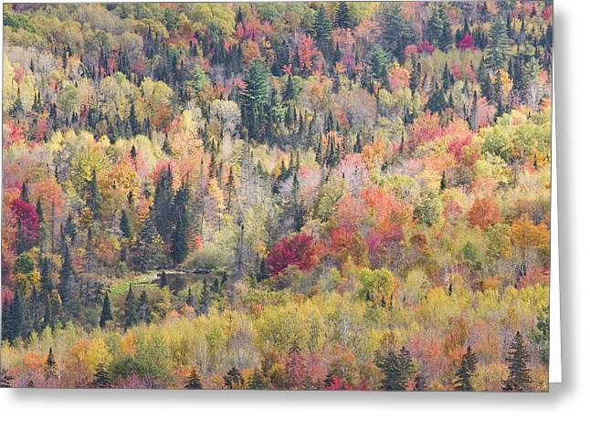 New England Wilderness Greeting Cards - Autumn Forest Landscape In Mount Blue State Park Weld Maine Greeting Card by Keith Webber Jr