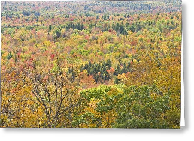Maine Landscape Greeting Cards - Autumn Forest Mount Blue State Park Weld Maine Greeting Card by Keith Webber Jr